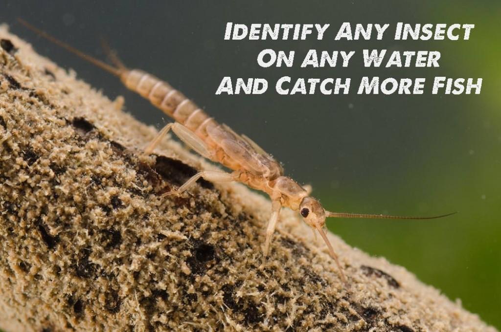 Fly Fishing Entomology Course - 1