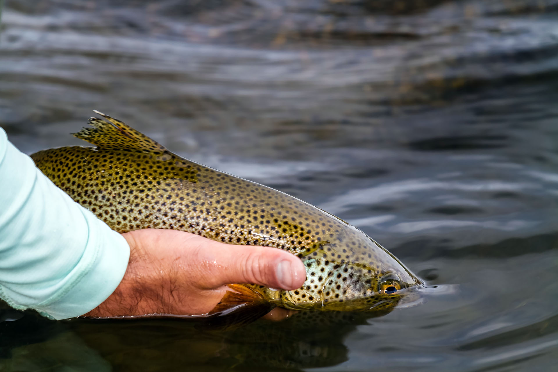 10 things i wish i knew when learning to fly fish the for Fly fishing 101
